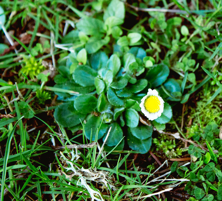 19-spring1
