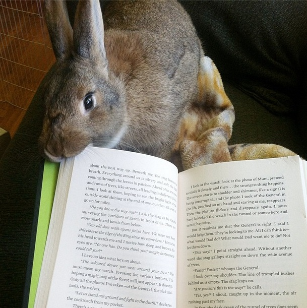 29-reading