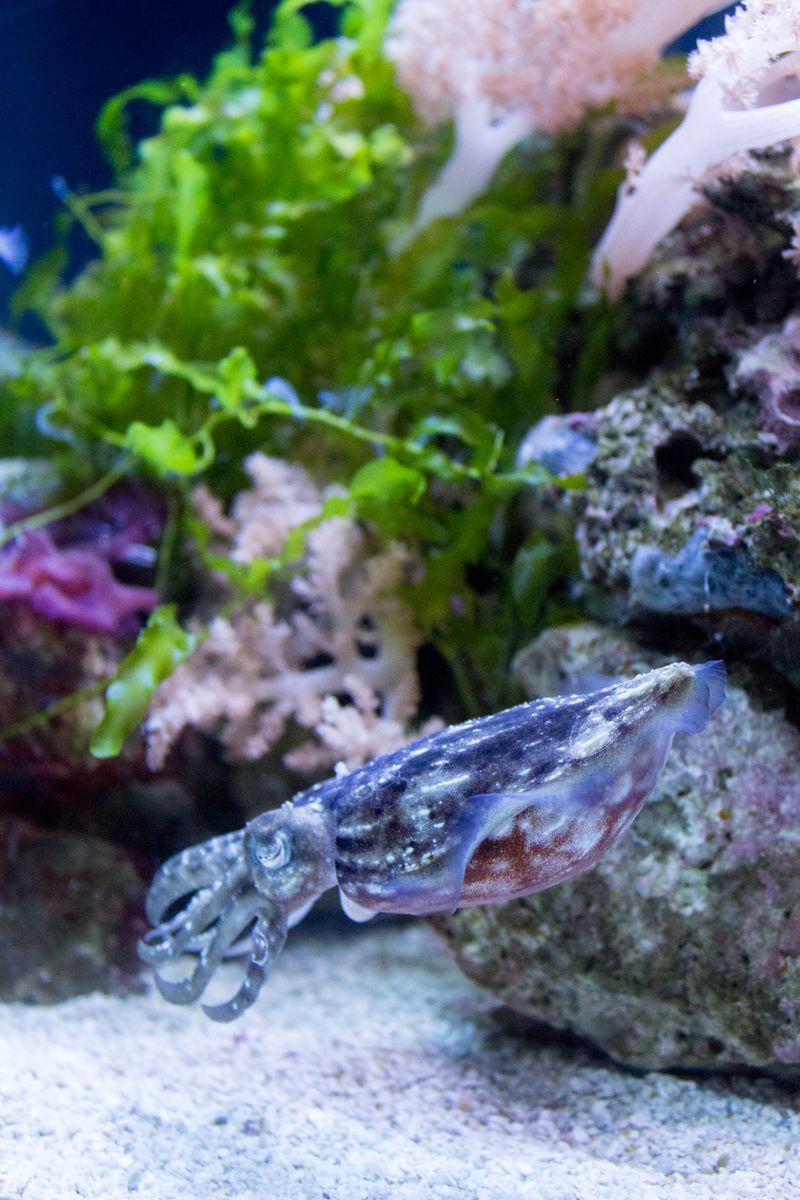 23-aquarium8