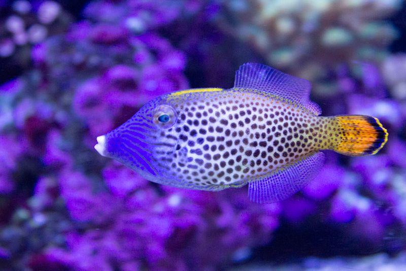23-aquarium5