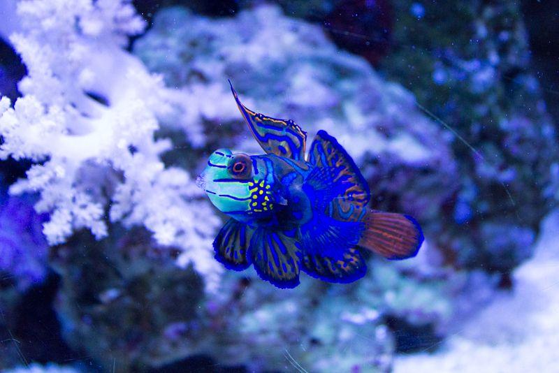 23-aquarium3