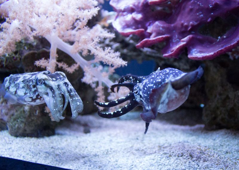 23-aquarium6