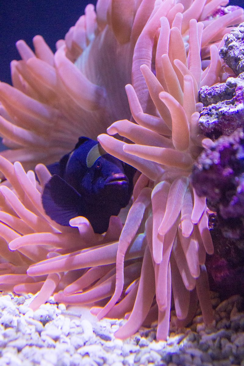 23-aquarium9