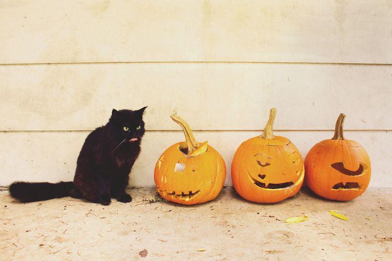 19-halloween-cat2