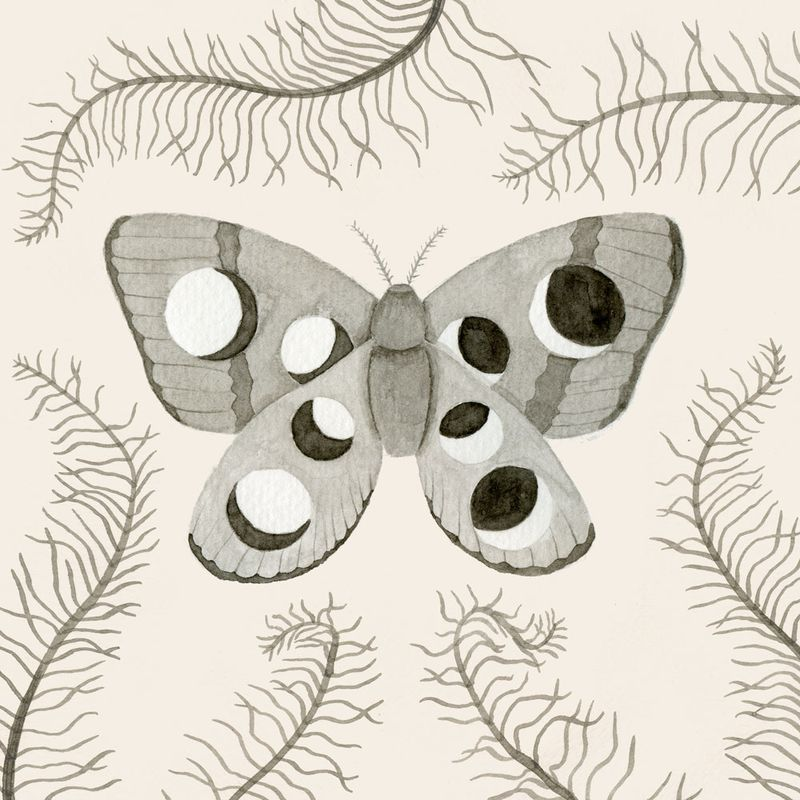 06-Moth-Pillow