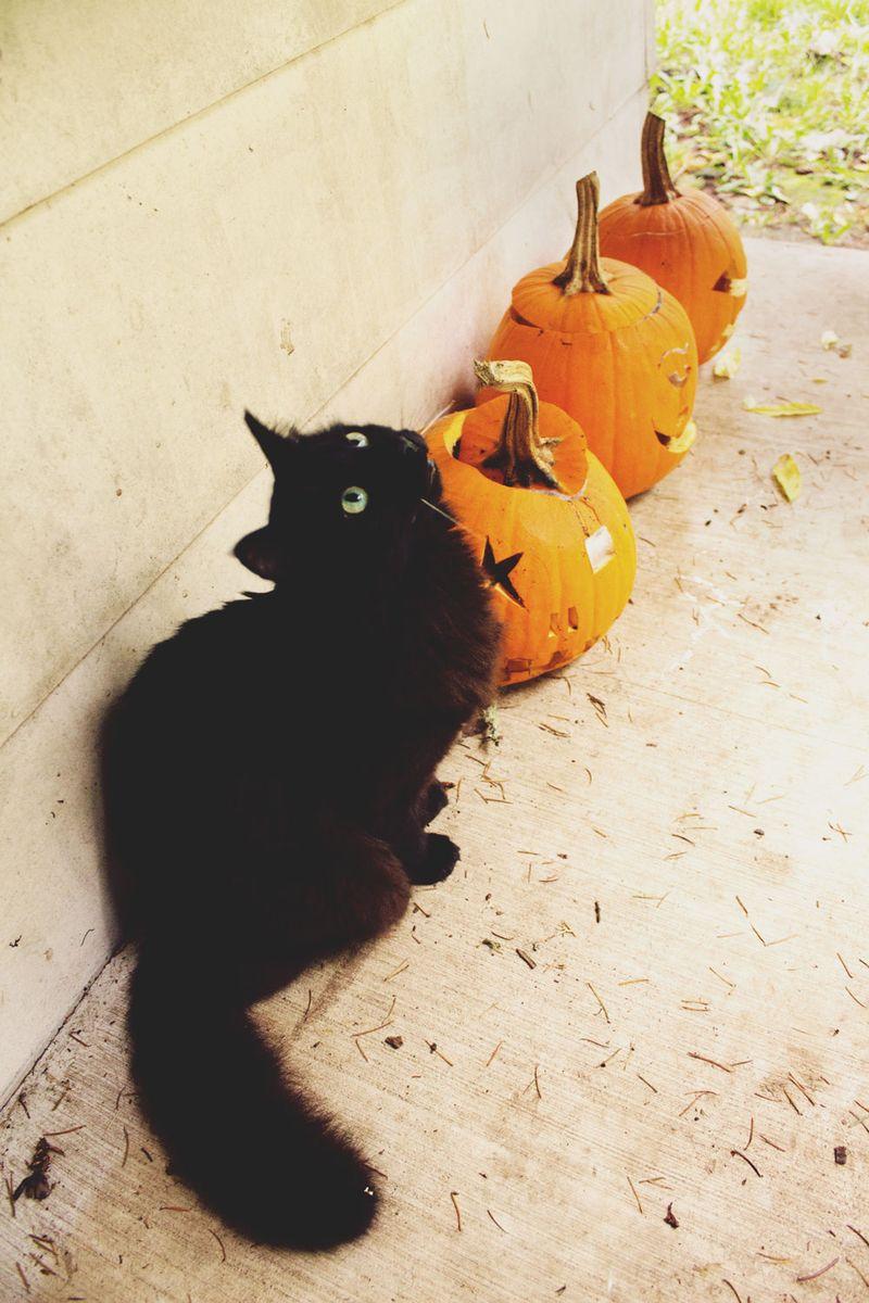 19-halloween-cat3