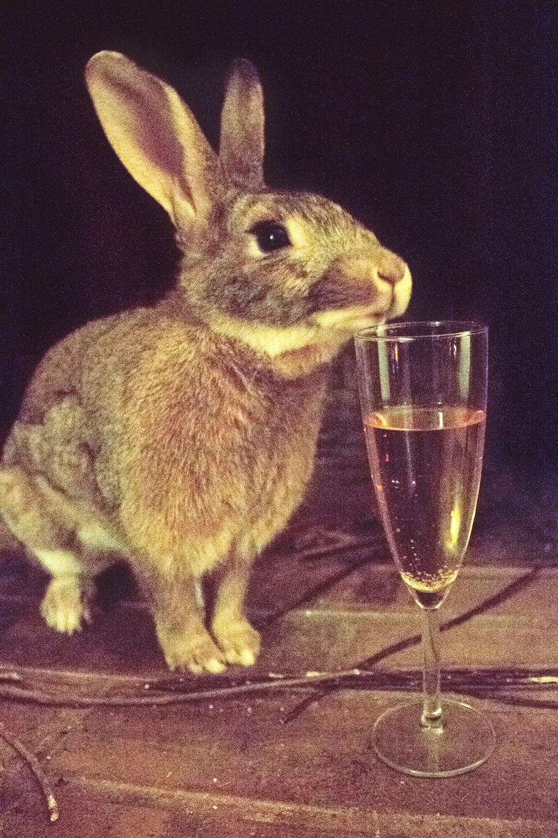01-bunny-champagne