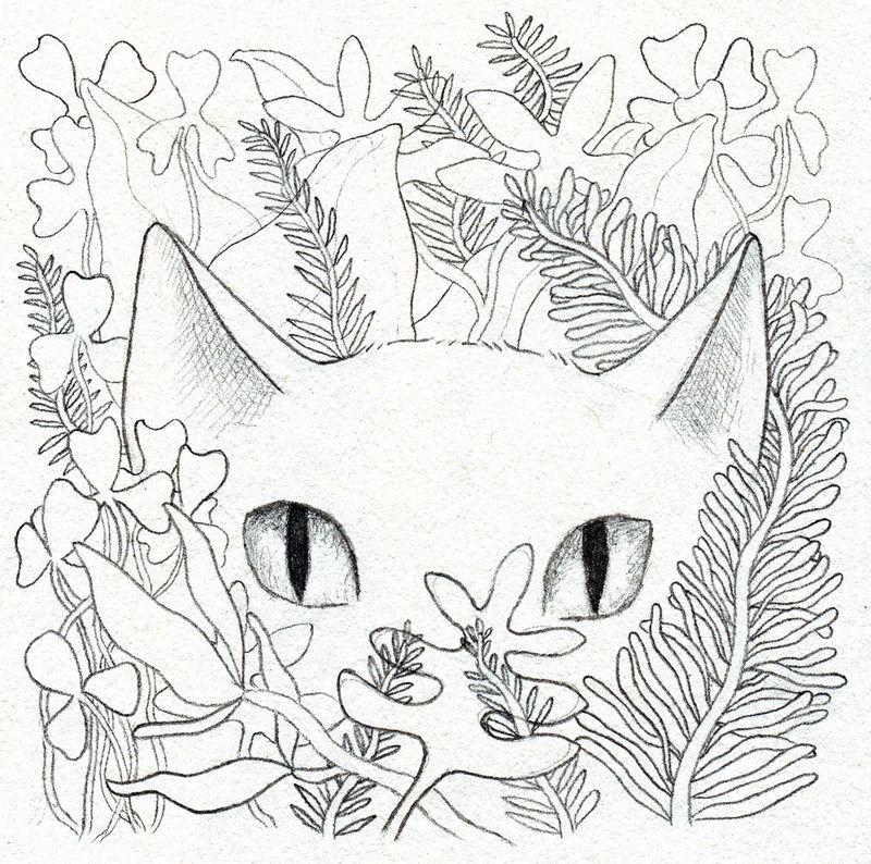 16-cat-sketch